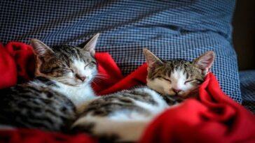 λόγοι γιατί οι γάτες είναι το πιο κουλ κατοικίδιο